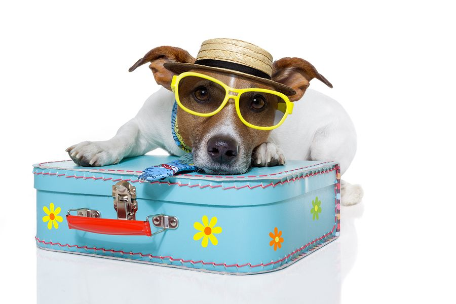 bigstock-tourist-dog-with-hat-and-a-bag-33478691[1]