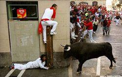 bull_trouble