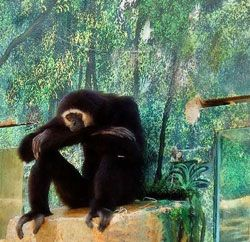 sitting_monkey